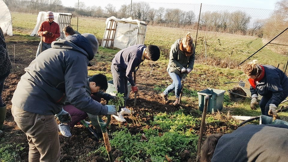 Community Gardening as a part of sustainable living in Oxford – The Oxford  Student