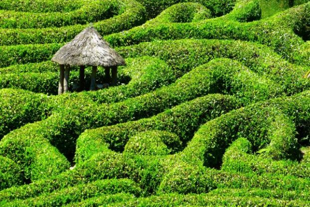 maze, labyrinth, puzzle, building, hedges, hedge maze, lost, confused, direction, dyslexia, dyscalculia, travel