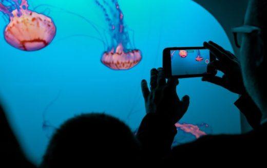 Squids being recorded in an aquarium