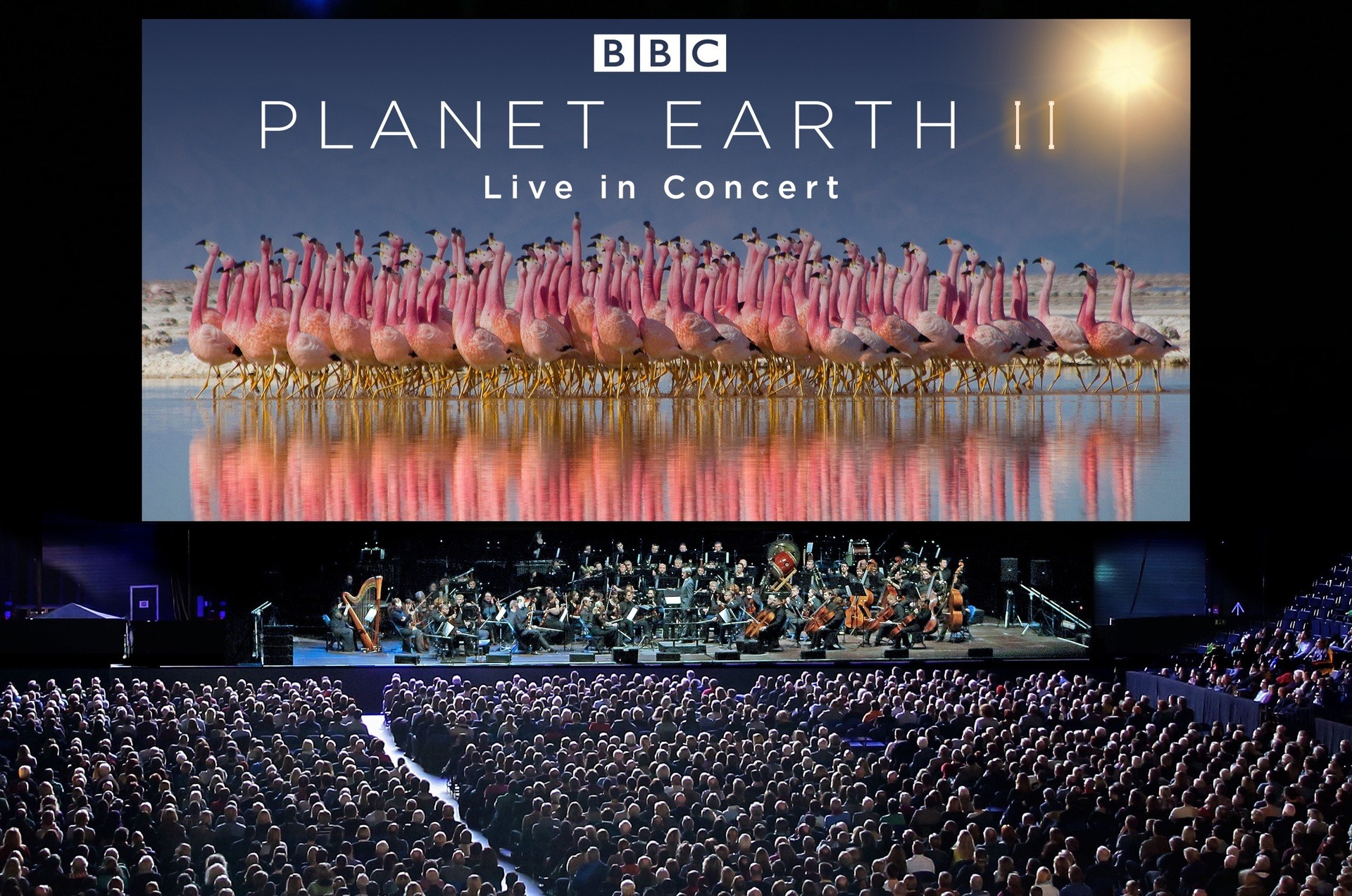 Planet Earth 2 Set To Return To Dublin In