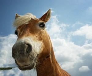 Horse Songs - Oxygen.ie