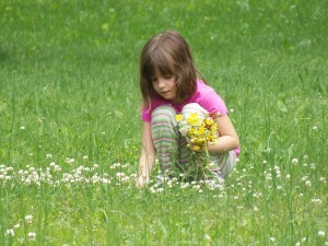 waterford bans flower picking