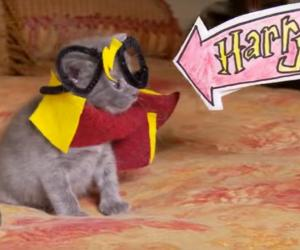 harry potter kitten