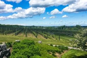 Anyela's Vineyards/Oyster