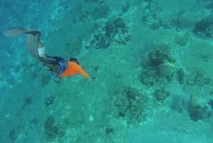 Catamaran Sail and Snorkel Tour in Cozumel/Viator