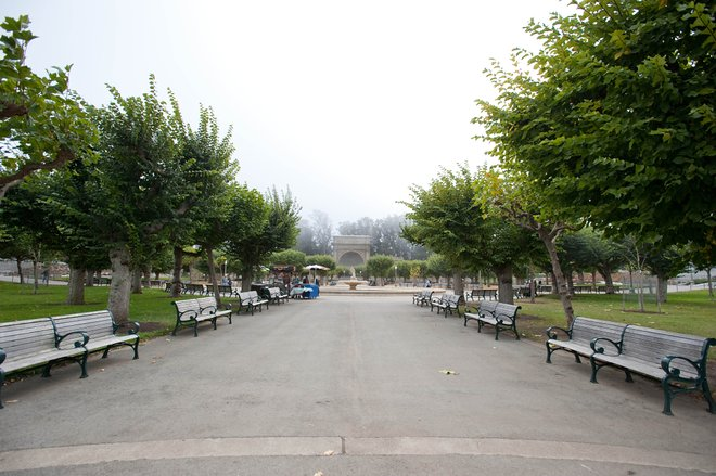 Golden Gate Park, San Francisco / Oyster