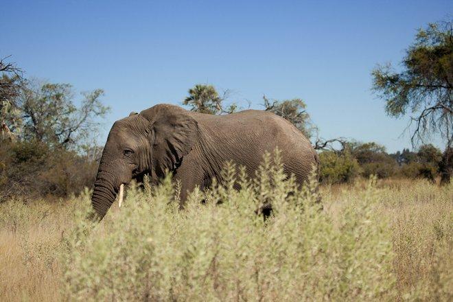 Game Drive presso eBeyond Nxabega Okavango Tented Camp / Oyster