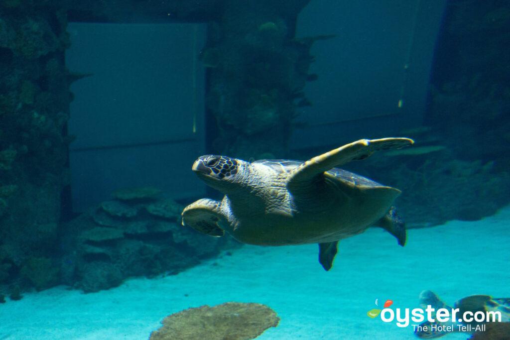 Shark Reef Aquarium en Mandalay Bay Resort & Casino / Oyster