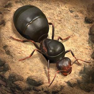 The Ants Underground Kingdom