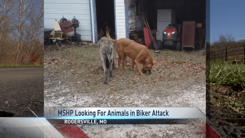 Suspect Dogs in Biker Attack