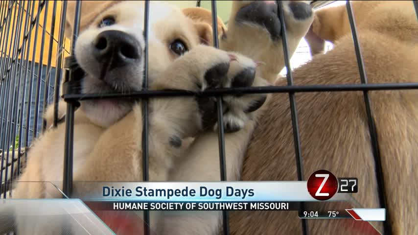 Canine Capers Showcased at Dixie Stampede Dog Days_62866640