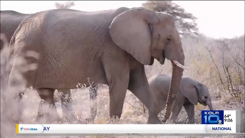Trump Delays Change in Elephant Hunting Policy_66198873