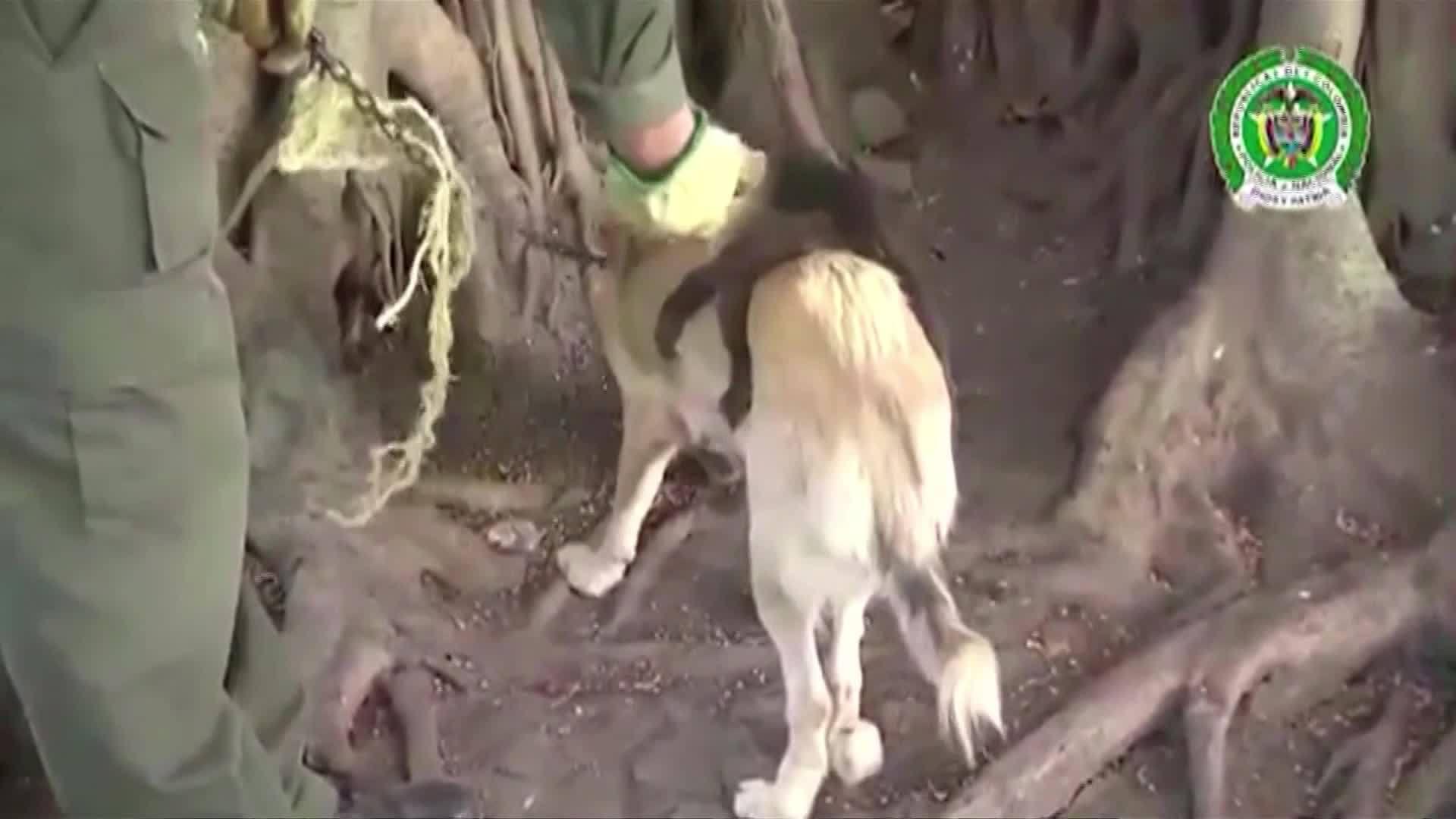 Dog_Adopts_Capuchin_Monkey_0_20180217213606
