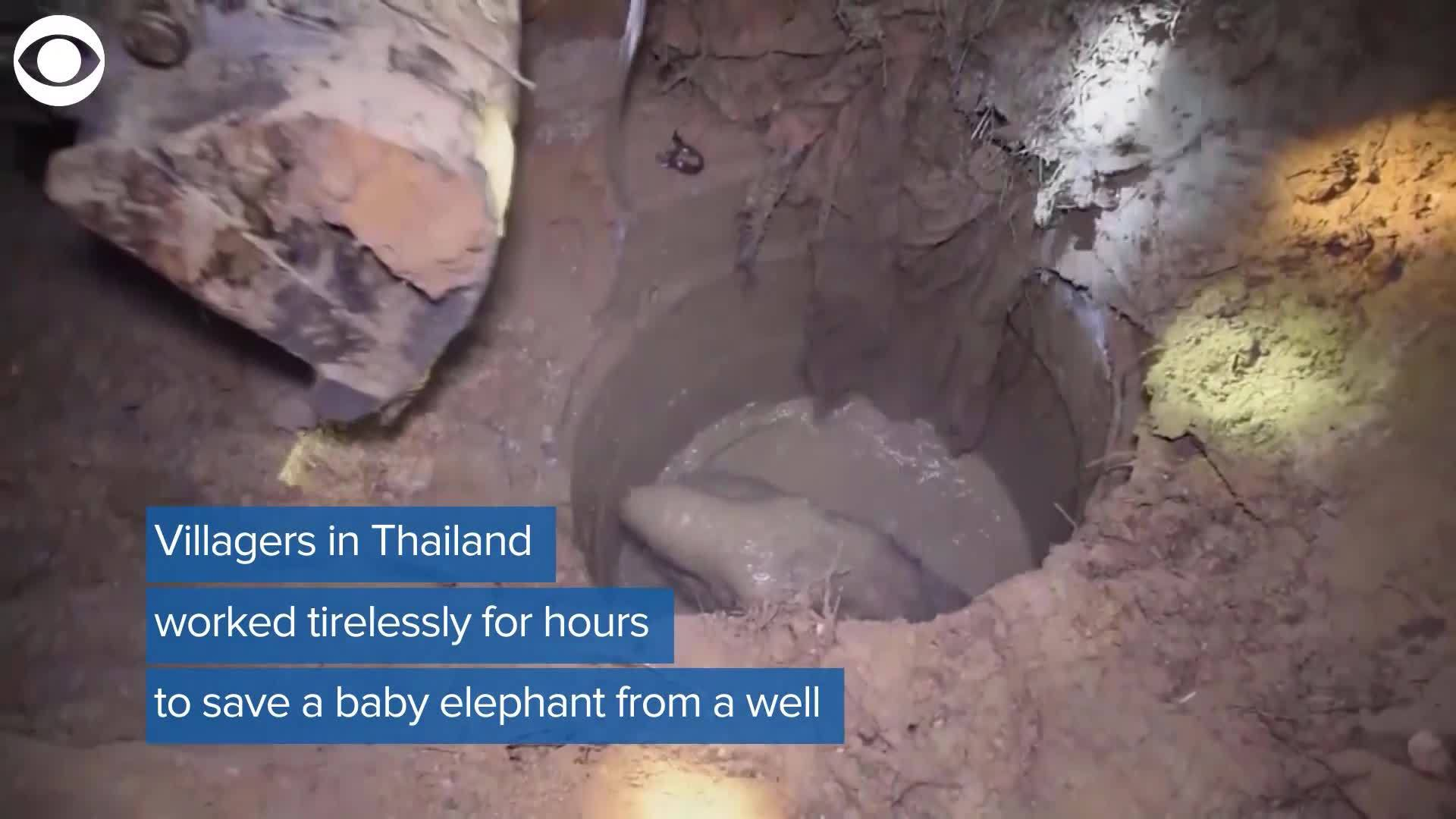 Web_Extra__Baby_Elephant_Rescue_0_20180216224031