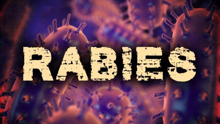 rabies graphic_1522707974767.jpg.jpg