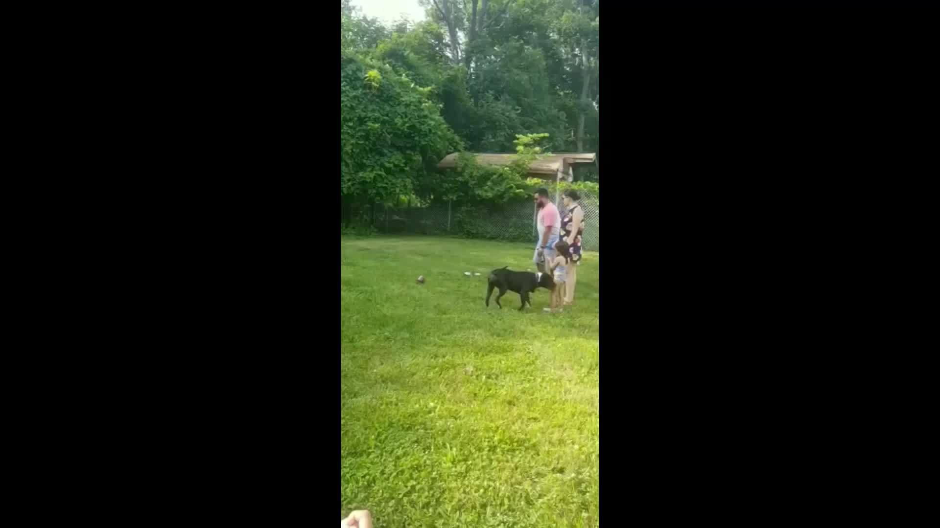 Dad_Breaks_Ankle_During_Gender_Reveal_0_20180618191357