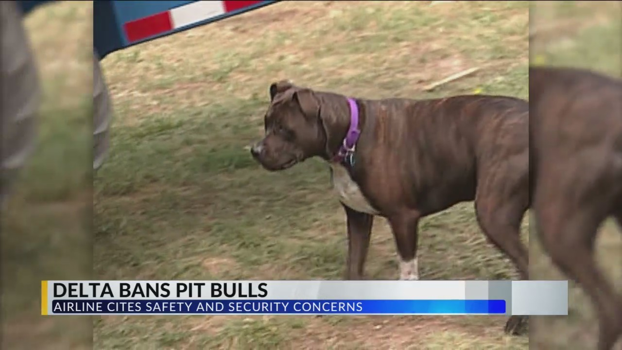 Delta_Bans__Pit_Bull_Type_Dogs__on_Fligh_0_20180623032738