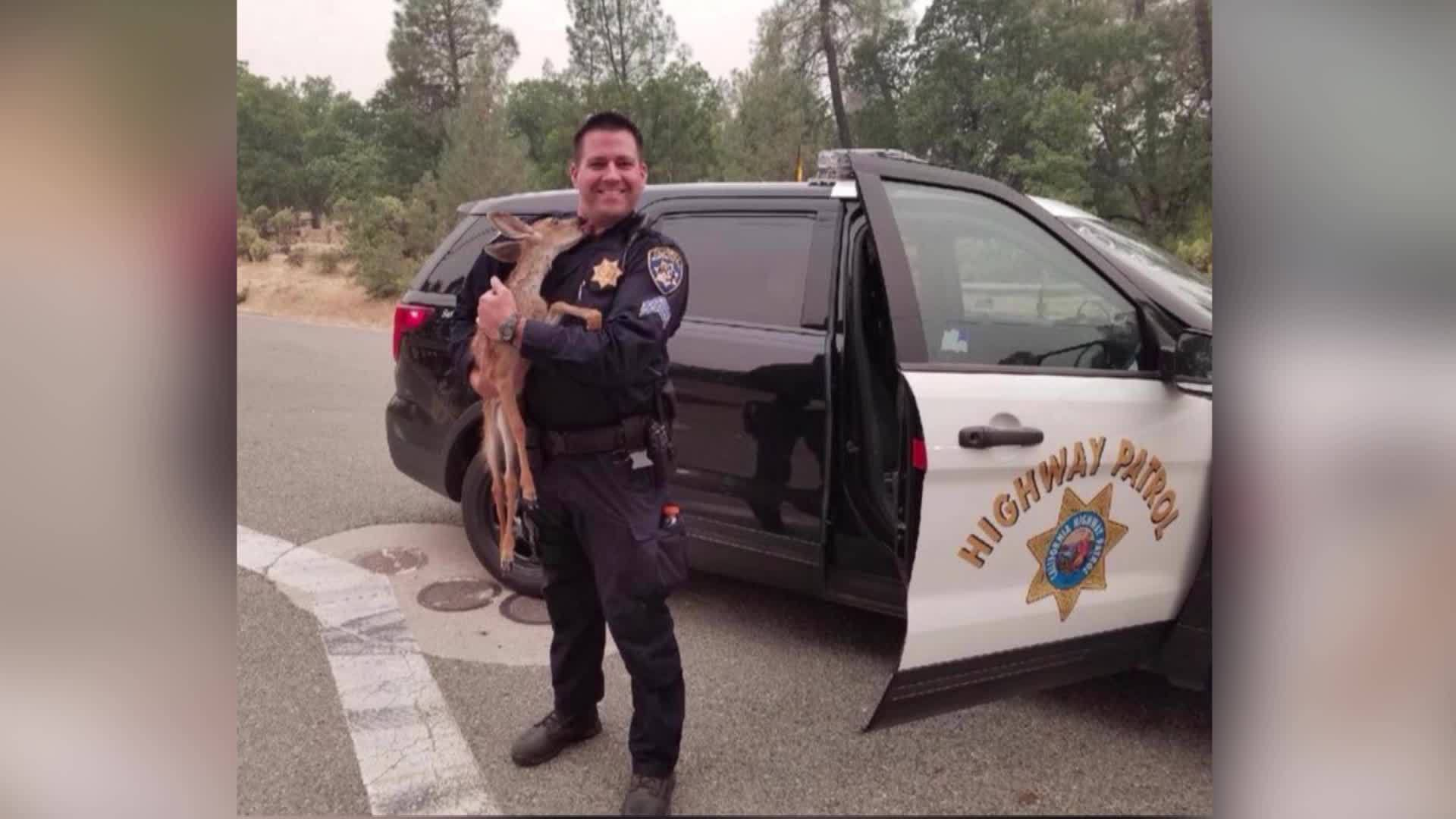 Cop_Rescues_Fawn_from_California_Wildfir_0_20180729232024