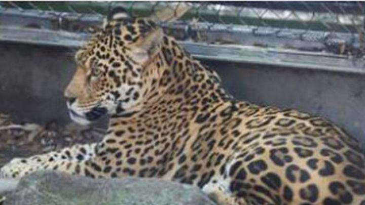 jaguar_1531598283156.jpg
