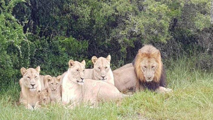 lions_1530821580570.jpg