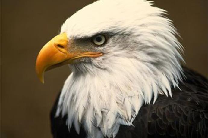 Reminder_ Eagle Days Returns to Springfield this Weekend_-7612127071376879882