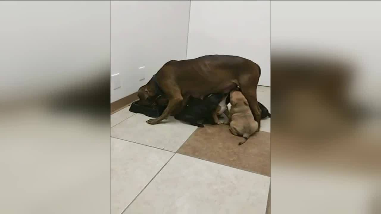 Dogs_Dumped_at_Vet_Clinic_Find_Foster_Ho_6_20190209040948