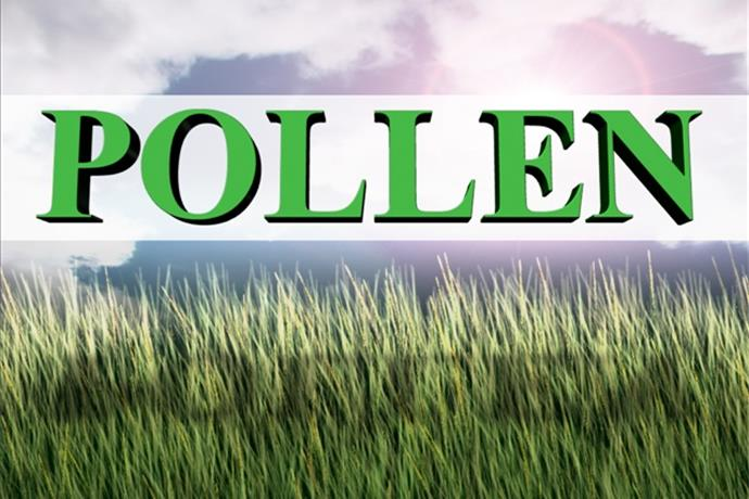 Attention, Allergies Sufferers_ Pollen Has Arrived_-365976160661188661