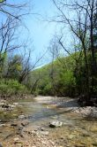 Piney Creek in Spring