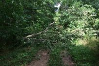 Tree down at the eastern end of the Yellow Trail Short Cut - Busiek State Forest and Wildlife Area