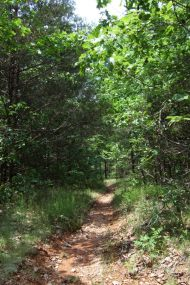 Typical Hercules Glades trail