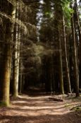 A dark Larchwood path at Comrie Scotland