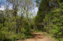 This is the eastern boundary of the area and the Yellow trail, seen here, turns north. The Silver trail turns South with a steep ascent of 300 ft. which has a gradient of 1:2 in places. The descent is on the other side is steeper but easier going.