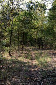 Coy Bald Trail