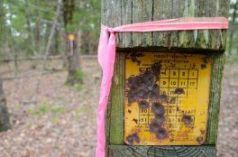 Survey Marker - near Coy Bald Trailhead