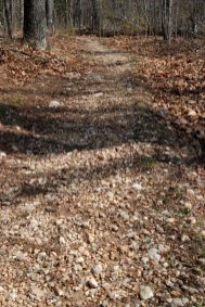 Typical trail conditions - Bell Mountain Trail