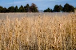 Open Area - grasses
