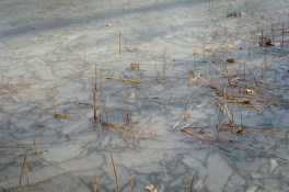 Ice on a stock pond - Compton Hollow Conservation Area