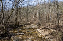 Creek crossing point on the White Trail at Busiek We took a few minutes to take a couple of pictures before climbing up the hill. Google Earth has it as an 800' ascent. Nah. 400' is nearer to the truth. January 30, 2016 | Copyright © 2016, all rights reserved