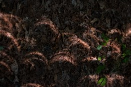 Sunlight crescents on the ground in the Mark Twain National Forest - Total Solar Eclipse in Missouri