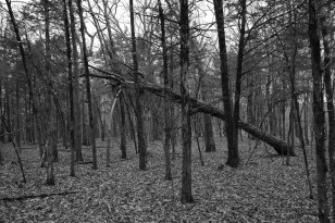 It was hard to find a safe spot to set up camp, there are a lot of dead and dying trees in this part of the wilderness.