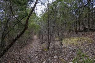 The trail closed in a bit here.