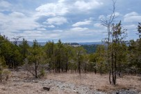 Looking south across the glades from the Tower Trail.