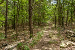The first two thirds of the Coy Bald trail runs along a ridge.