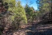 A brushy bit of the Upper Pilot (Devil's Den East) Trail.