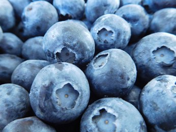 OZblu-Blueberries-Background-4