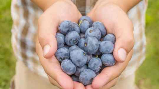 Blueberries improve attention in children