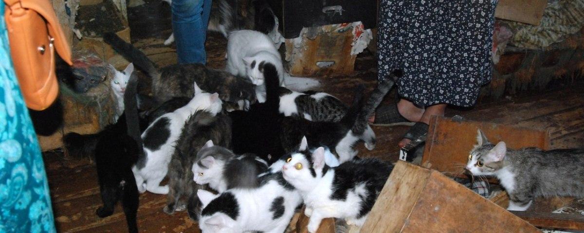 Кошкин дом и озонирование от запаха кошек