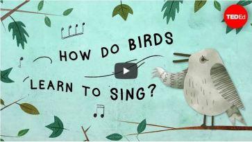 Informativ und unterhaltsam: Ted-Ed Videos sind inhaltlich und visuell nicht selten das Non Plus Ultra der öffentlich zugänglichen Lernvideos im Internet. Ein Video mit diesem graphischen und inhaltlichen Anspruch kostet aber schnell so viel wie ein kleiner Werbefilm (How do birds learn to sing, https://ed.ted.com/lessons/how-do-birds-learn-to-sing-partha-mitra)