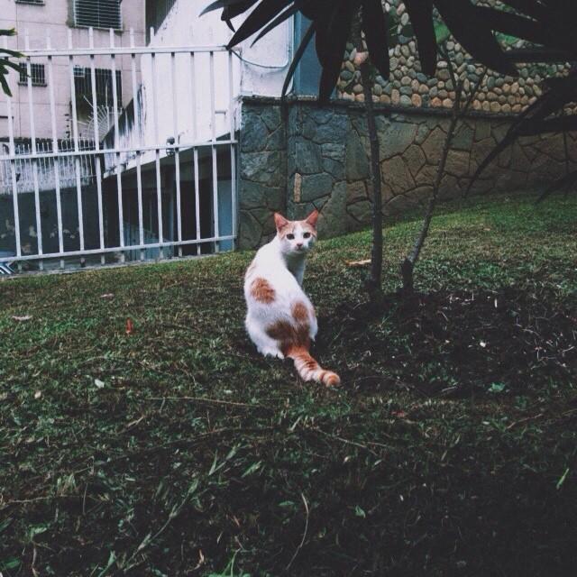 Sorprendí a un gato