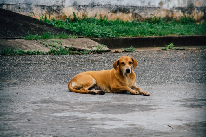 Perros de visita en la casa